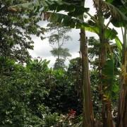 Kolumbie 544